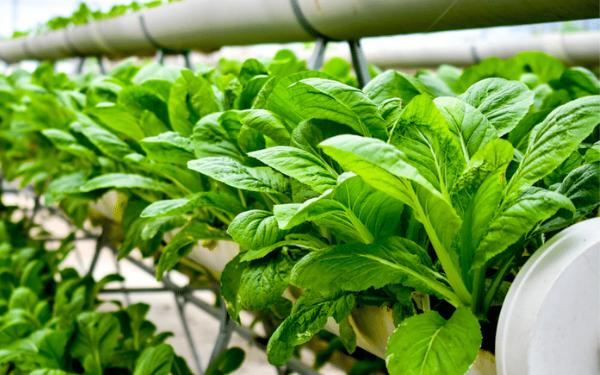 Peluang Bisnis Usaha Agrobisnis