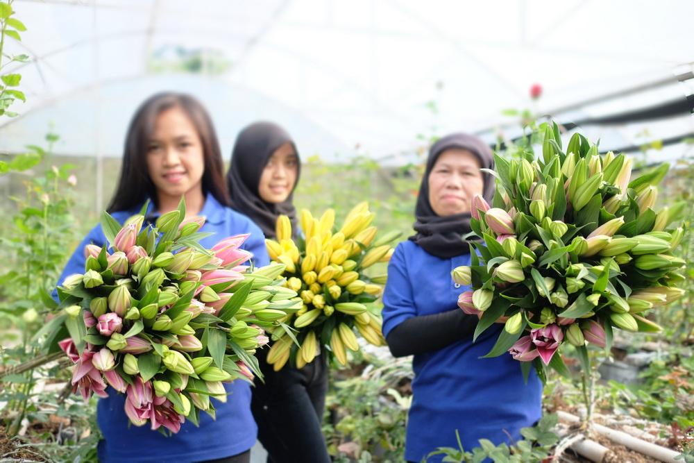 Peluang Usaha Bunga Potong