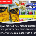 Jual Rujak Cireng Mesrod dan Piscok Lumer | Area Jakarta dan Tangerang Selatan | WA. 0838 1573 9186