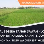 Jual Tanah Sawah Murah di Krian Sidoarjo   Tanah Luas Lokasi Strategis Bisa Nego   WA. 0815 1571 0425